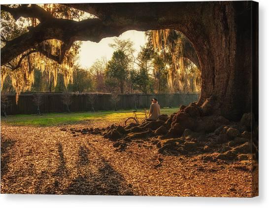 Live Oak At Audubon Park Canvas Print