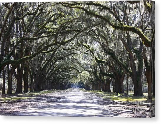 Live Oak Lane In Savannah Canvas Print