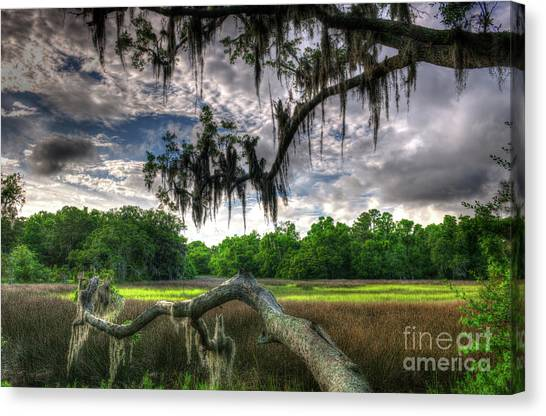 Live Oak Marsh View Canvas Print