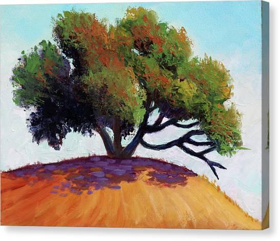 Live Oak Tree Canvas Print
