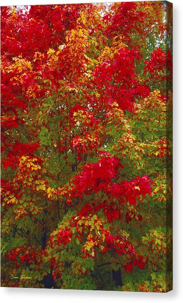 Living Color Canvas Print