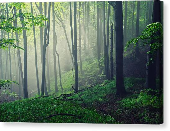 Living Forest Canvas Print