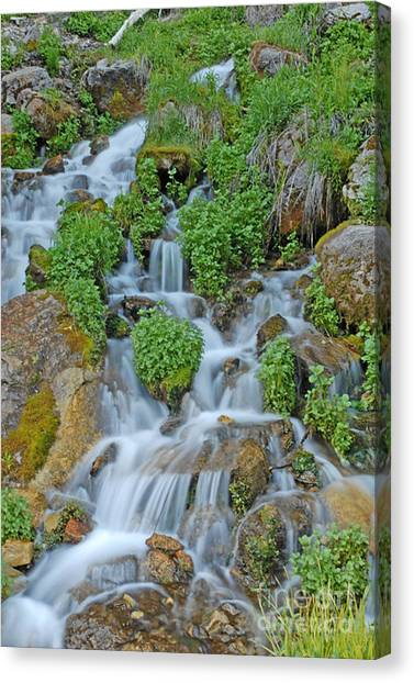 Logan Canyon Cascade Canvas Print by Dennis Hammer