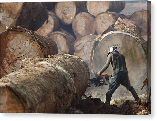 Chainsaw Canvas Print - Logger Cutting Tree Trunk, Cameroon by Cyril Ruoso