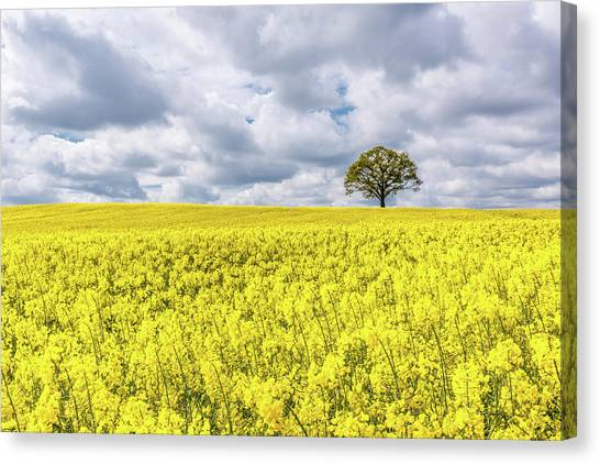 Canvas Print featuring the photograph Lone Beauty by Nick Bywater