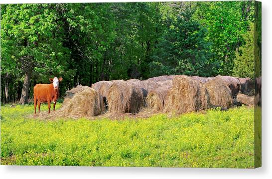 Lone Cow Guard, Smith Mountain Lake Canvas Print
