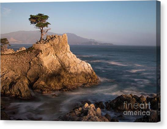 lone Cypress Tree Canvas Print