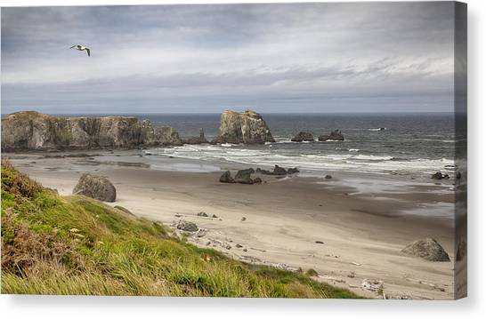 Lone Gull - Bandon Beach Canvas Print