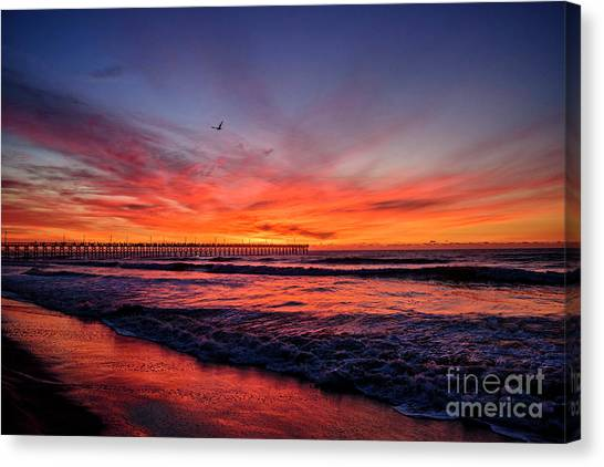 Lone Gull Canvas Print