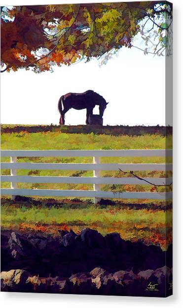Equine Solitude Canvas Print