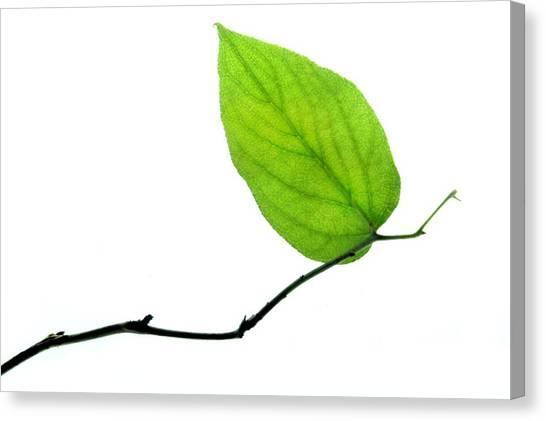Leaf Canvas Print - Lone Leaf by Dan Holm