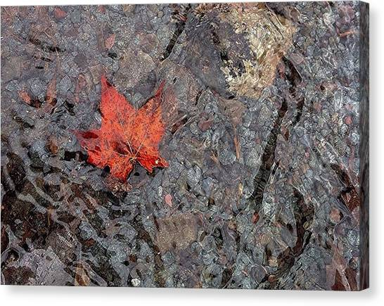 Wilderness Canvas Print - Lone Maple by Annie Walczyk