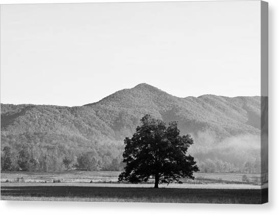 Lone Mountain Tree Canvas Print