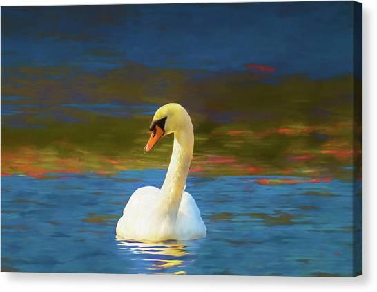 Lone Mute Swan. Canvas Print