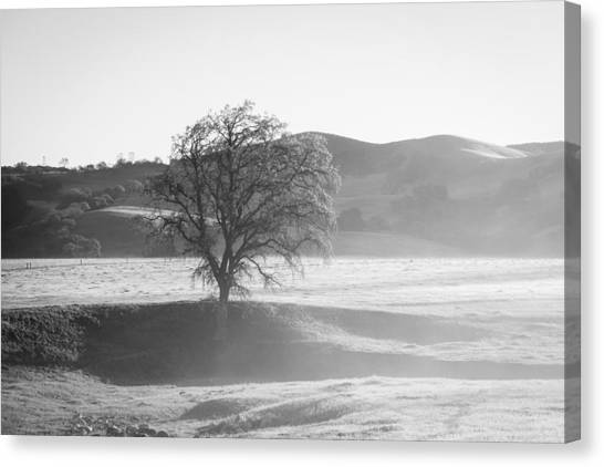Lone Oak, Clearing Fog, San Andreas Rift Valley Canvas Print