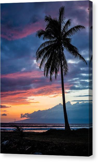 Palm Trees Sunsets Canvas Print - Lone Palm by Drew Sulock