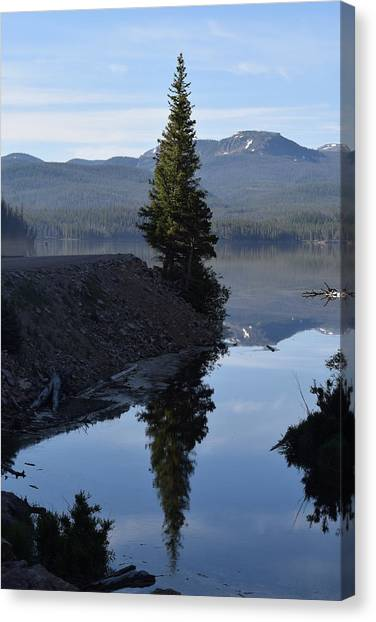 Lone Pine Reflection Chambers Lake Hwy 14 Co Canvas Print
