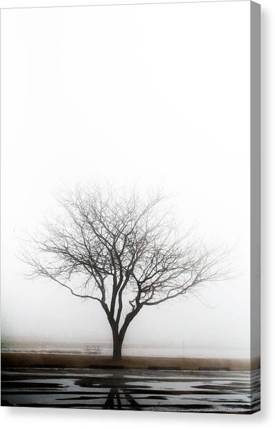 Lone Reflection Canvas Print