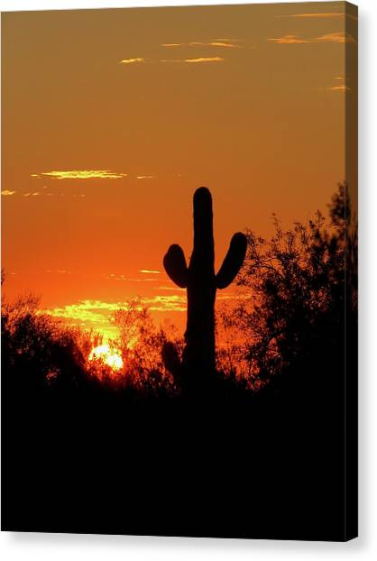 Lone Saguaro Sunrise Canvas Print