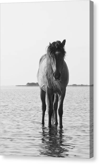 Lone Stallion Canvas Print