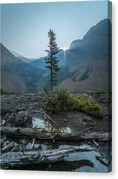 Lone Survivor // Bob Marshall Wilderness  Canvas Print
