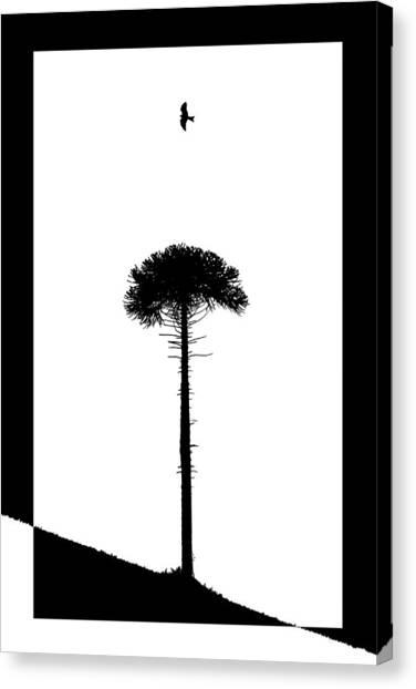 Adam Smith Canvas Print - Lone Tree by Adam Smith
