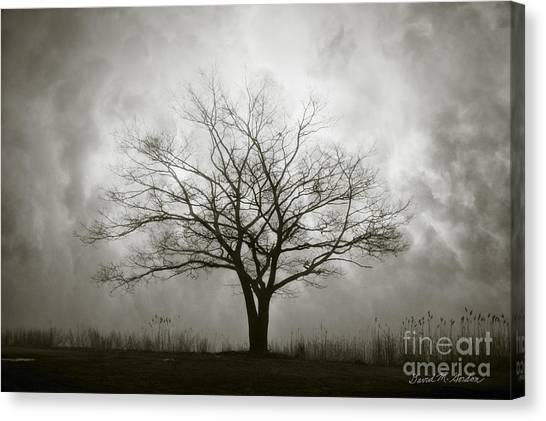 Lone Tree And Clouds Canvas Print
