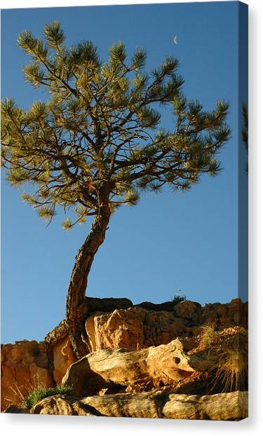 Lone Tree And Moon In Bryce Canyon Canvas Print