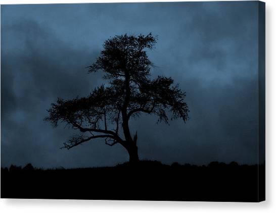 Lone Tree Blue Canvas Print