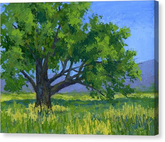 Lone Tree Canvas Print by David King