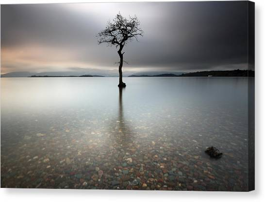 Lone Tree Loch Lomond Canvas Print