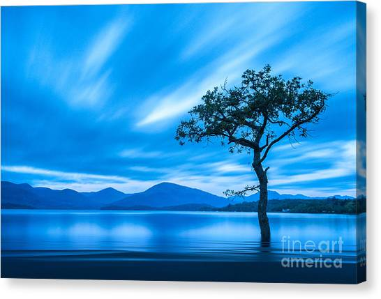 Queens Canvas Print - Lone Tree Milarrochy Bay by Janet Burdon
