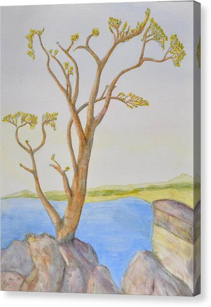 Lone Tree On The Ocean Canvas Print by Jonathan Galente