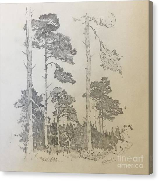 Lonely Pines Canvas Print