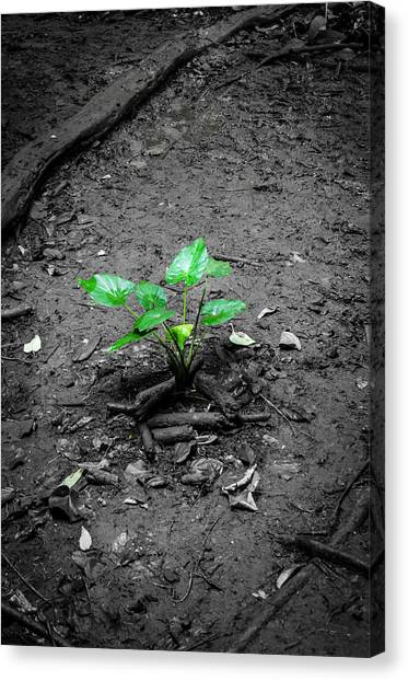 Lonely Plant Canvas Print