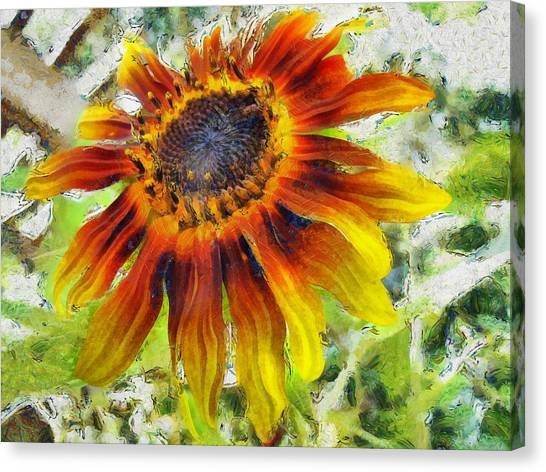 Lonely Sunflower Canvas Print