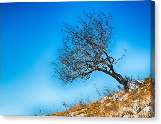 Lonely Tree Blue Sky Canvas Print