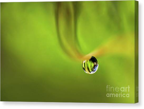 Lonely Water Droplet Canvas Print