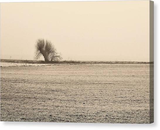 Canvas Print - Lone Willow by Slawek Aniol