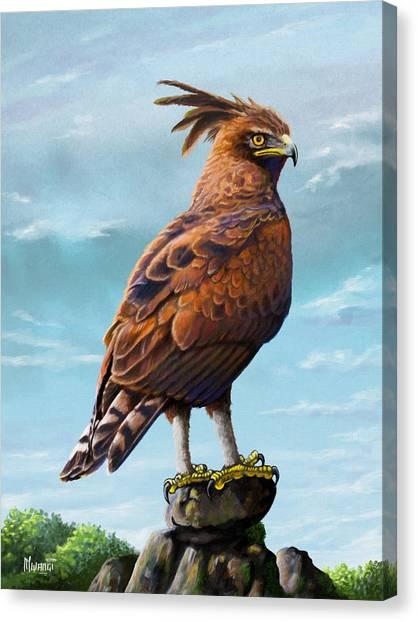 Long Crested Eagle Canvas Print
