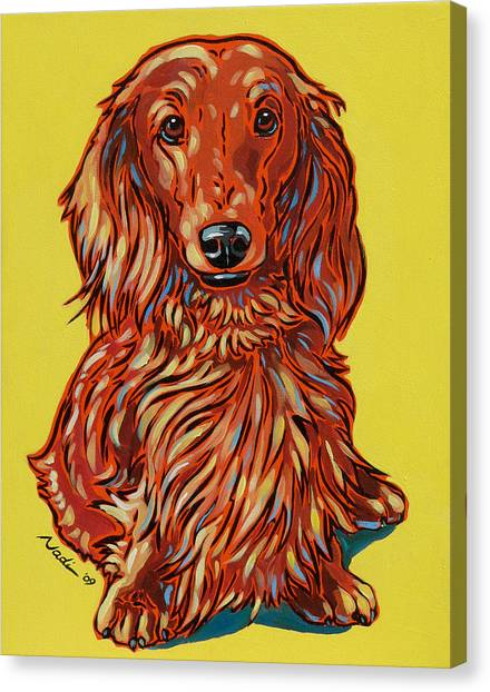 Dachshunds Canvas Print - Long Haired Dachshund by Nadi Spencer