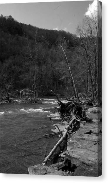 Long-pool-log-jam Canvas Print by Curtis J Neeley Jr