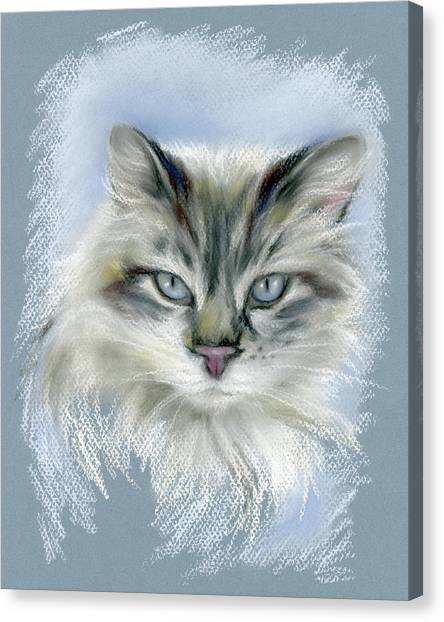 Canvas Print featuring the pastel Longhaired Cat With Blue Eyes by MM Anderson
