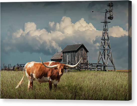 Longhorn Steer In A Prairie Pasture By Windmill And Old Gray Wooden Barn Canvas Print