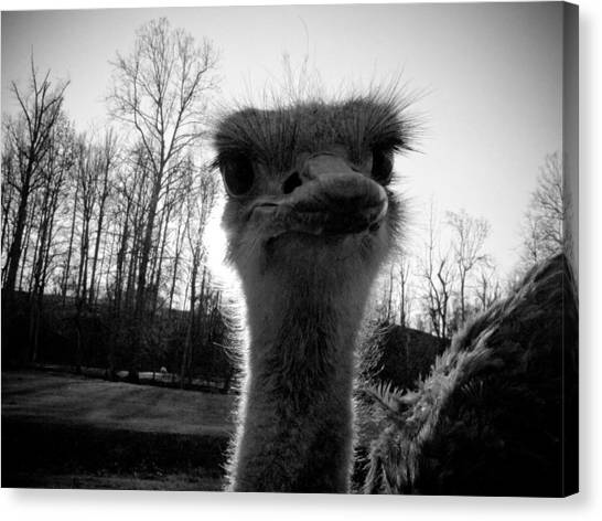 Emu Canvas Print - Look At Me Now by Jessica Brawley
