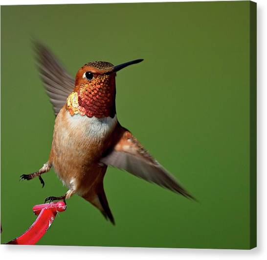 Look At Me Canvas Print