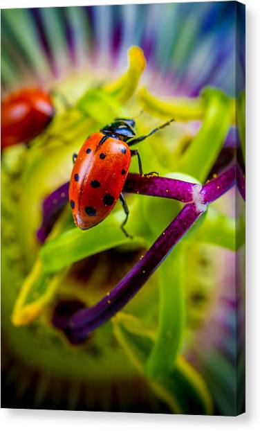 Look At The Colors Over There. Canvas Print