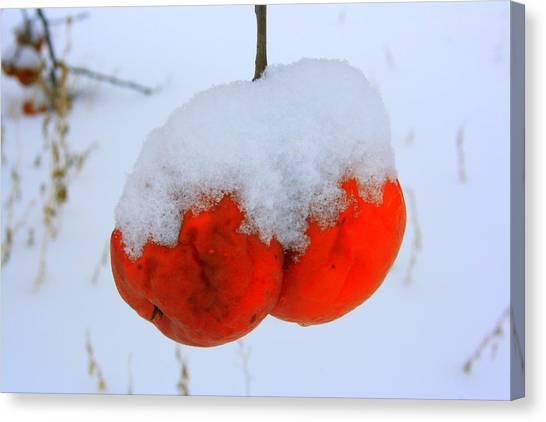 Look At Them Apples Canvas Print by Julie Lueders