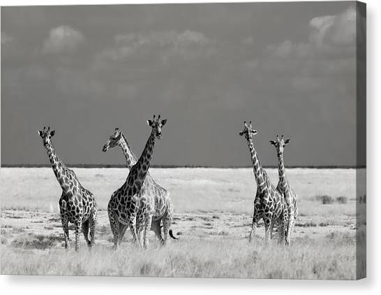 Neck Canvas Print - Look Girl Strange Animals by Mathilde Guillemot