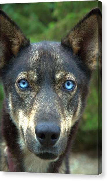 Look Into My Eyes... Canvas Print
